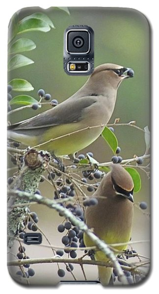 Cedar Wax Wings Galaxy S5 Case