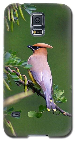 Cedar Waxwing 1 Galaxy S5 Case