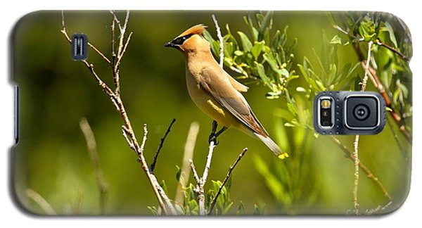 Cedar Waxwing At Glacier Galaxy S5 Case