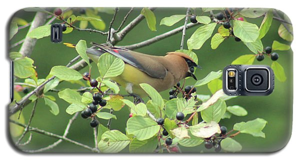 Cedar Waxwing Eating Berries Galaxy S5 Case by Maili Page