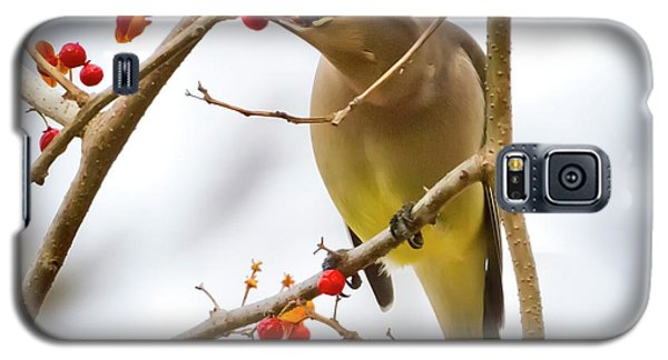 Cedar Waxwing Feeding  Galaxy S5 Case