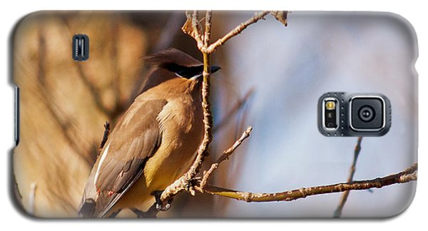 Cedar Waxwing In Autumn Galaxy S5 Case