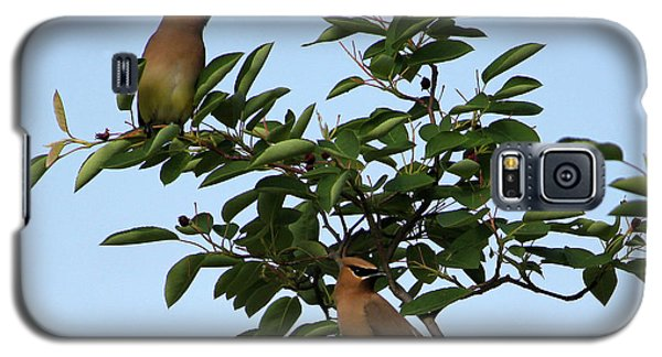 Cedar Waxwing Pair Galaxy S5 Case