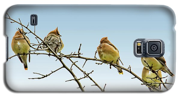 Cedar Waxwings Galaxy S5 Case
