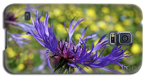 Centaurea Montana Flower Galaxy S5 Case