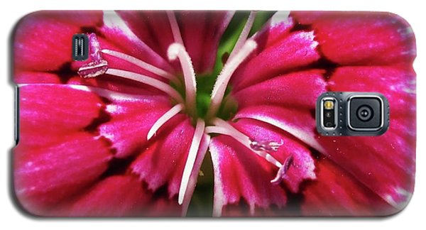 Center Of A Sweet William Galaxy S5 Case by Mary Ellen Frazee