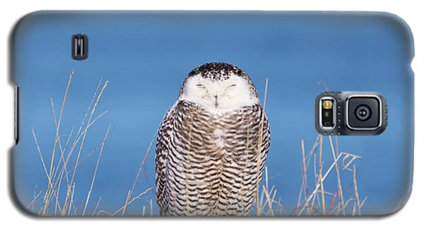 Centered Snowy Owl Galaxy S5 Case
