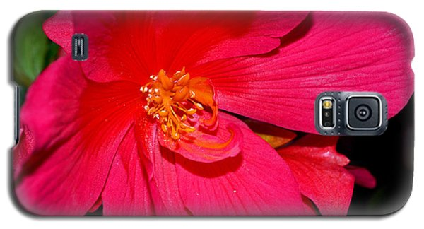 Galaxy S5 Case featuring the photograph Centerpiece - Pink Begonia 007 by George Bostian