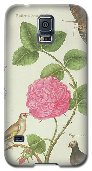 Centifolia Rose, Lavender, Tortoiseshell Butterfly, Goldfinch And Crested Pigeon Galaxy S5 Case by Nicolas Robert