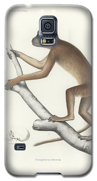 Central Yellow Baboon, Papio C. Cynocephalus Galaxy S5 Case by J D L Franz Wagner