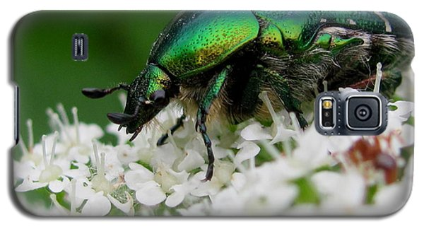Cetonia Aurata  Galaxy S5 Case by Irina Hays