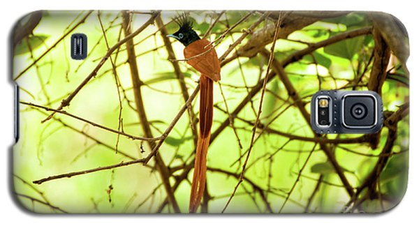 Ceylon Paradise Flycatcher Galaxy S5 Case