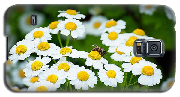 Chamomile Pollinating Galaxy S5 Case