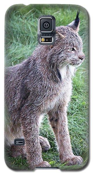 Champion Mama Lynx Galaxy S5 Case
