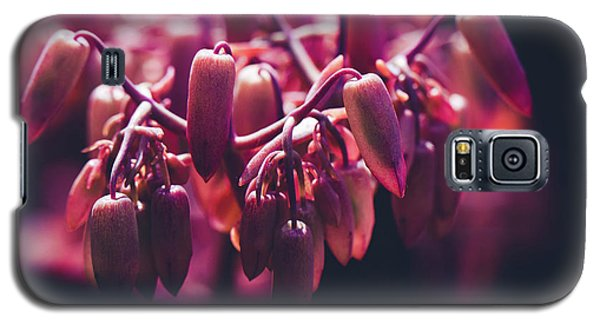 Galaxy S5 Case featuring the photograph Chandelier Plant Kalanchoe - A Solitary Morning by Sharon Mau