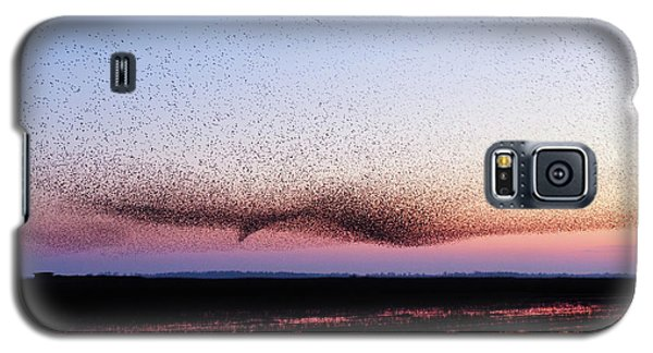 Chaos In Motion - Bird Of Many Birds Galaxy S5 Case