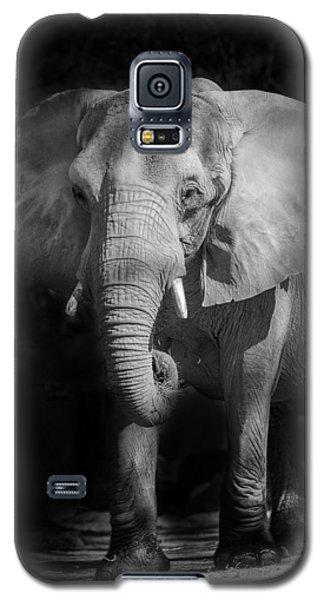 Charging Elephant Galaxy S5 Case