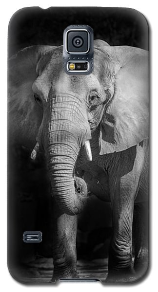 Charging Elephant Galaxy S5 Case