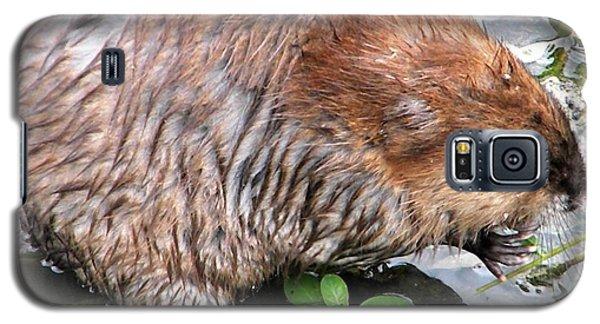 Charley The Muskrat Galaxy S5 Case