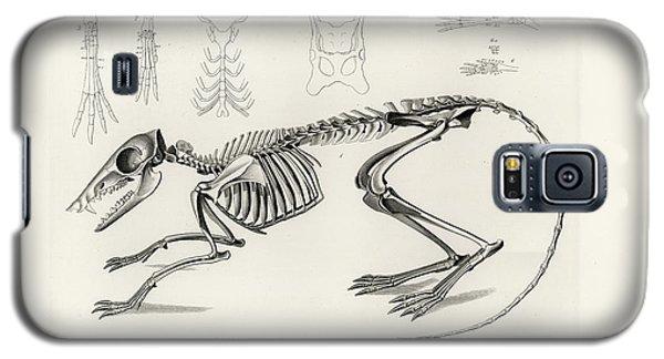 Checkered Elephant Shrew Skeleton Galaxy S5 Case