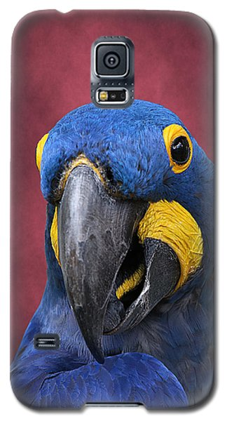Cheeky Macaw Galaxy S5 Case