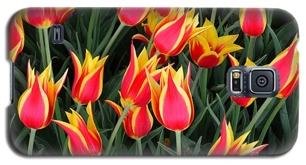 Cheerful Spring Tulips Galaxy S5 Case