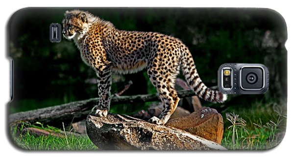Cheetah Cub Finds Her Pride Rock Galaxy S5 Case
