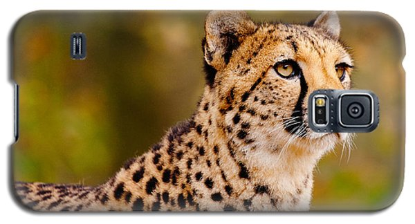 Cheetah In A Forest Galaxy S5 Case