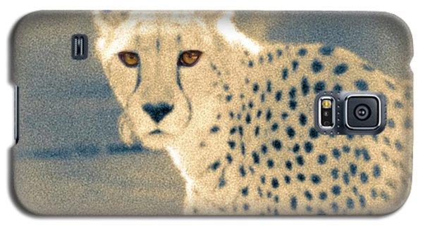 Cheetah Galaxy S5 Case