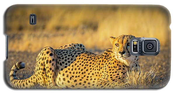 Cheetah Portrait Galaxy S5 Case by Inge Johnsson