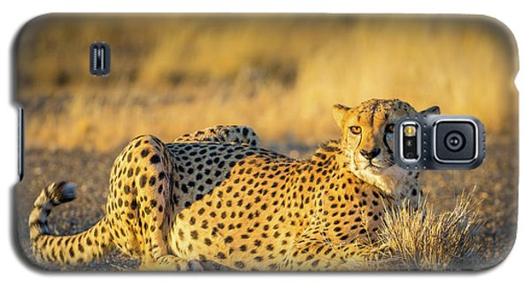 Cheetah Portrait Galaxy S5 Case by Inge Johnsson