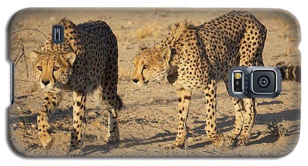 Cheetahs Galaxy S5 Case