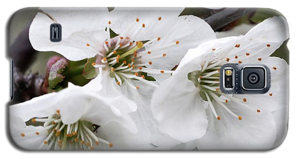 Cherry Blosoms Galaxy S5 Case