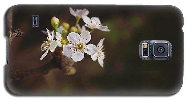 Cherry Blossom Galaxy S5 Case by April Reppucci