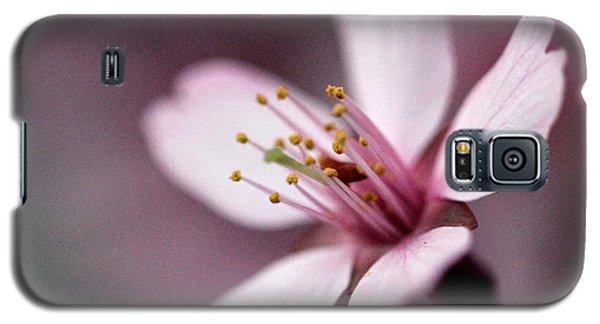 Cherry Blossom Galaxy S5 Case by Joseph Skompski