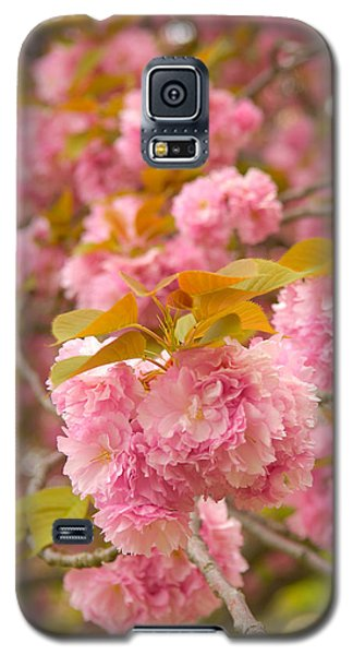 Cherry Blossom Galaxy S5 Case by Sebastian Musial