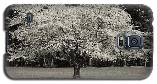 Cherry Blossom Tree - Ocean County Park Galaxy S5 Case