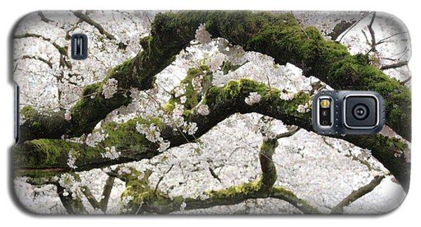 Cherry Blossoms 104 Galaxy S5 Case