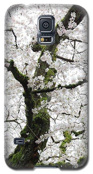 Cherry Blossoms 119 Galaxy S5 Case