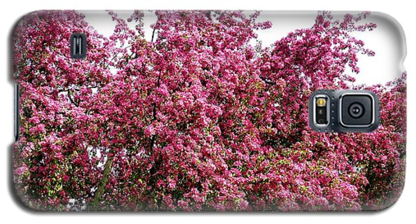 Cherry Blossoms 2 Galaxy S5 Case by Will Borden