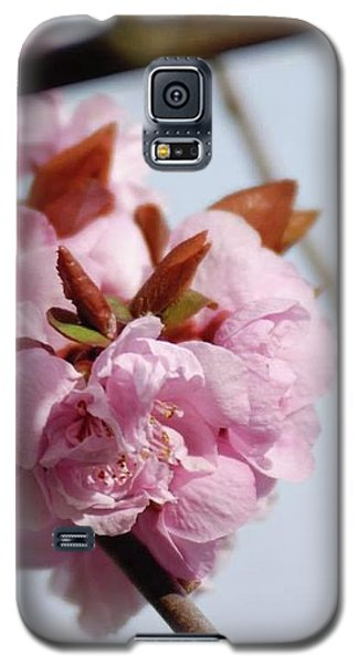 Cherry Blossoms Galaxy S5 Case