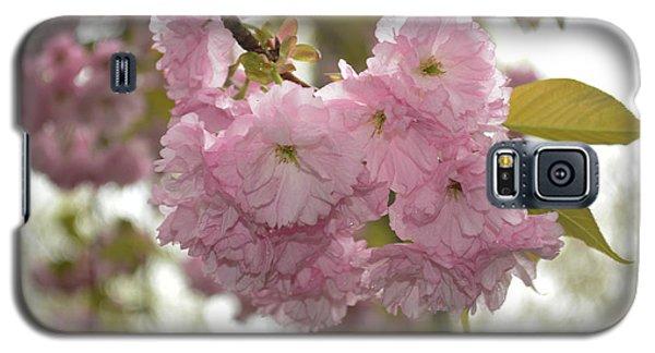 Cherry Blossoms Galaxy S5 Case