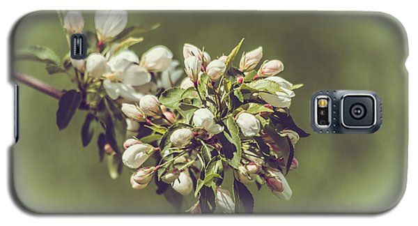 Cherry Blossoms Galaxy S5 Case by Yeates Photography