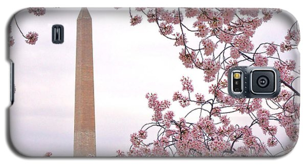 Cherry Washington Galaxy S5 Case by Olivier Le Queinec