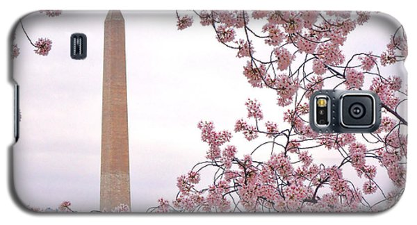 Cherry Washington Galaxy S5 Case