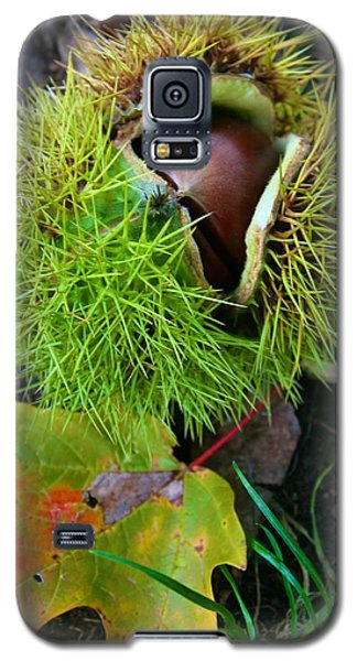 Galaxy S5 Case featuring the photograph Chestnut Fresh From The Tree by Polly Castor