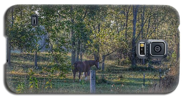 1009 - Chestnut Horse Among The Trees Galaxy S5 Case