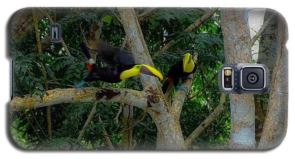 Chestnut-mandibled Toucans Galaxy S5 Case