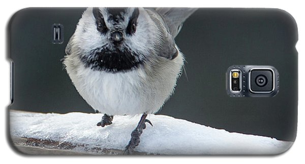Chic At Big Springs Wildlife Art By Kaylyn Franks Galaxy S5 Case
