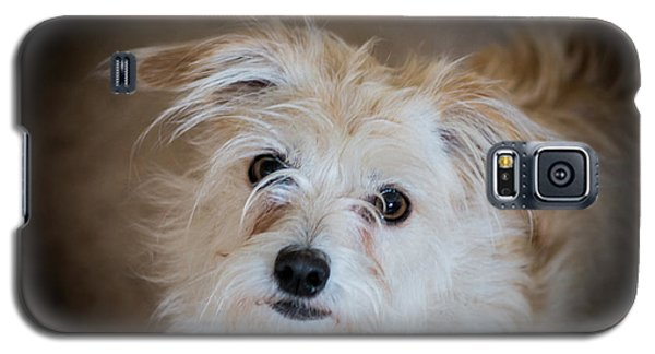 Chica On The Alert Galaxy S5 Case